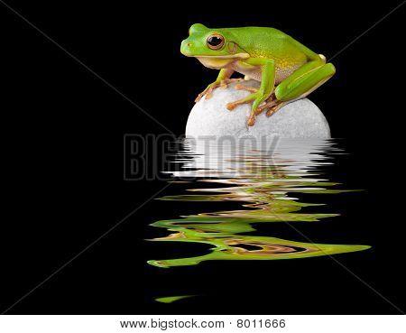 Frog On Boulder
