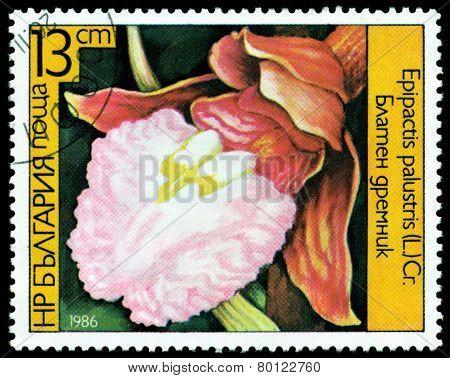 Vintage  Postage Stamp. Epipactis Palustris .