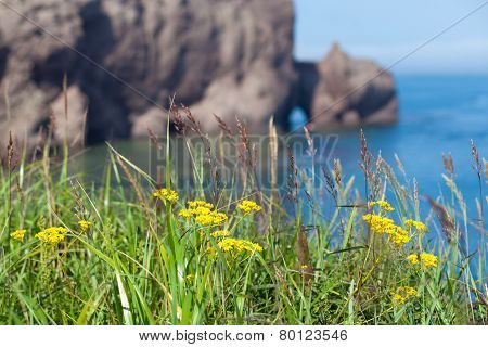 Yellow Flowers On A Rock Near The Sea
