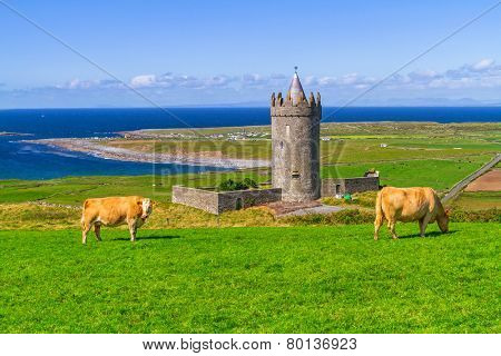 Doonagore castle with cow on the farm, Ireland