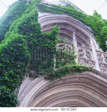 Old building covered with green ivy