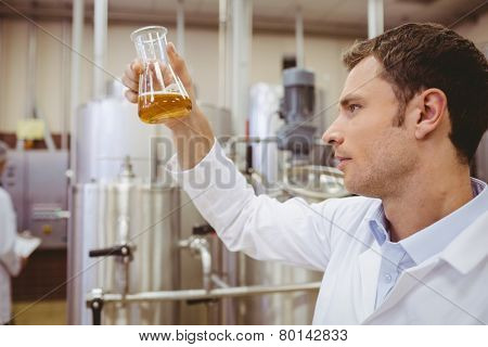 Focused scientist looking beaker with beer in the factory