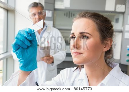Young scientist looking at slide at the laboratory