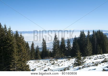 Winter panoramic landscape