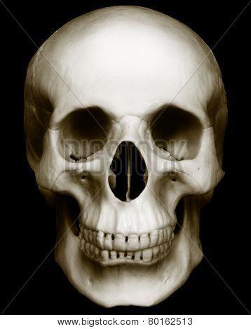 Skull Isolated On Dark Background