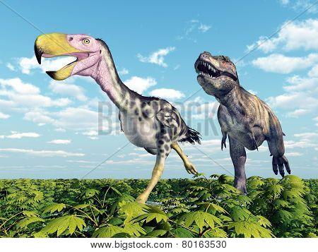 Tyrannosaurus Rex attacks the Terror Bird Kelenken
