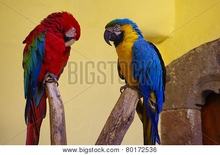Two Parrots