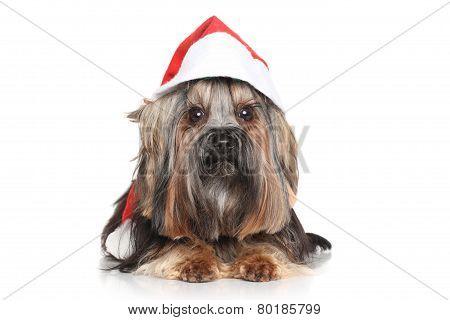 Yorkshire Terrier In Santa Red Hat