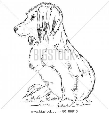 vector - small dachshund dog - isolated on background