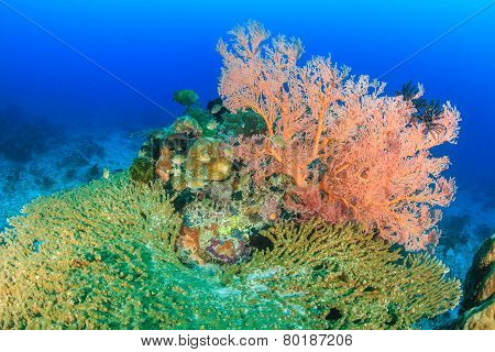 Hard and soft coral on a reef