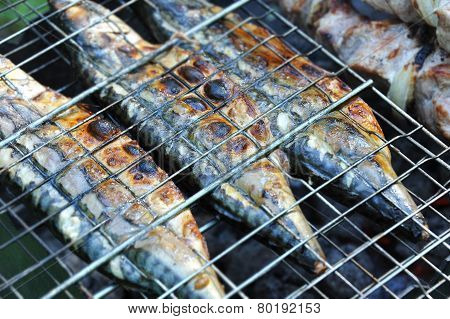 Grilled mackerel fish, DOF