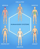 image of human nervous system  - Vector human body systems illustration - JPG