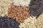 image of rice  - background of six rice grains including different brown rice grains - JPG