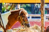 stock photo of horses eating  - Close up shot Horse eating hay in farm - JPG