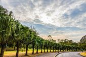 picture of tree lined street  - Along the tree - JPG