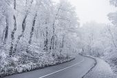 image of snowy-road  - Winter road leading into the forest snowy trees - JPG