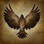 picture of faithfulness  - Wings of freedom on a grunge texture background as a breaking free and spirituality faith symbol as a bird with open spread feathers flying upward to success - JPG