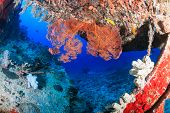 picture of wrecking  - Coral encrusted stairs on an underwater wreck - JPG