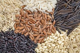 picture of rice  - background of six rice grains including different brown rice grains - JPG
