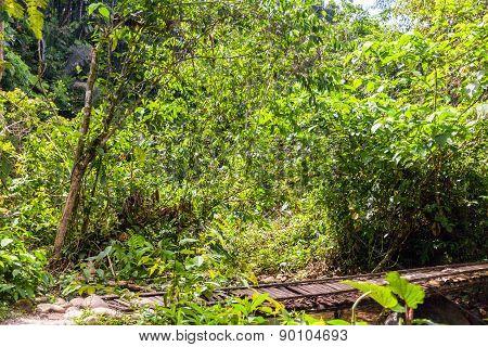 Amazonian Flora, National Park Yasuni, South America