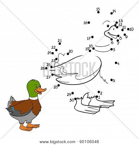 Numbers Game (duck)