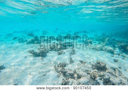exotic marine life near Maldives island, tropical summer vacation concept