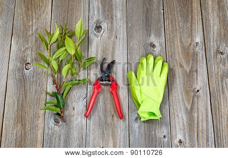 Garden Tools For Pruning Plants