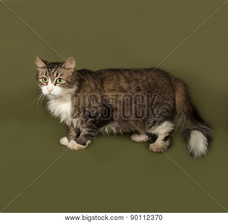 Fluffy Tabby And White Cat Standing On Green