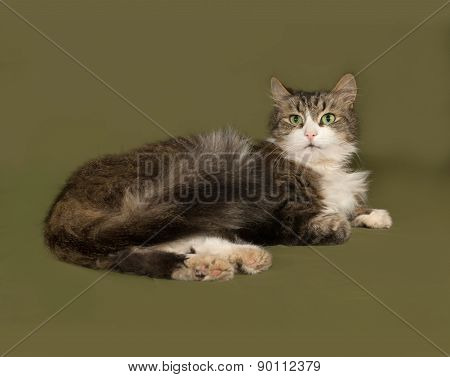 Fluffy Tabby And White Cat Lies On Green