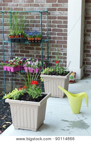 Newly Planted Spring Flowers In Flowerpots