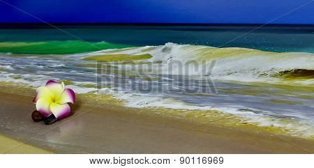 Pink And Yellow Flower On Beach With Pebbles And Wave Break