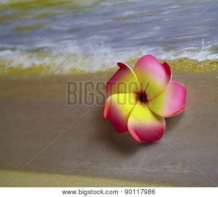 Pink Flower On Beach
