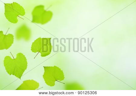 Falling Vine Leaves