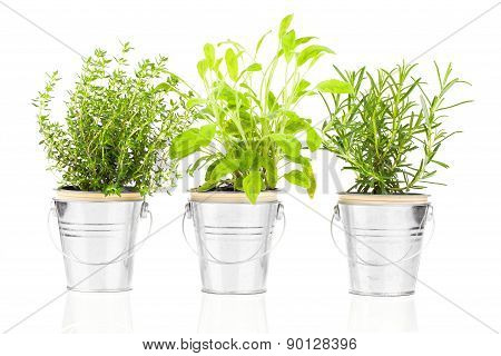 Sage, Thyme And Rosemary Herb Plant Growing In A Distressed Pewter Pot, Isolated Over White Backgrou