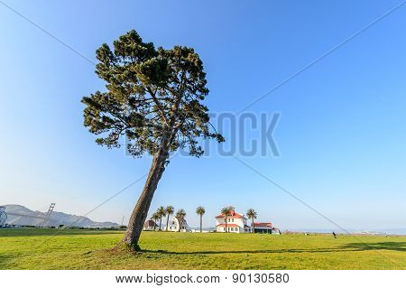 The park in Crissy field, San Francisco