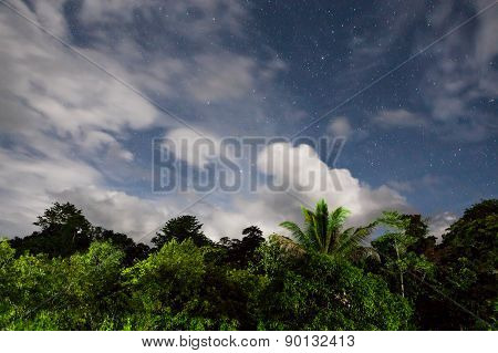 Rainforest treetops and starry sky