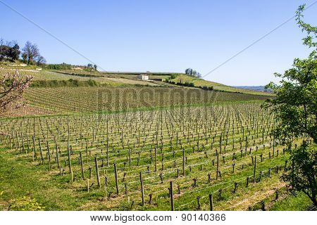 Vineyards In Saint Emilion, Bordeaux, France