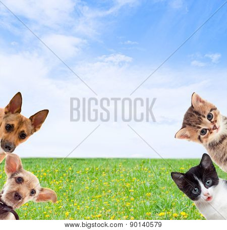 Pets On  Green Grass
