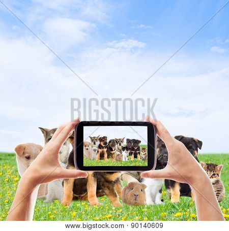 Photographing  Group Pets
