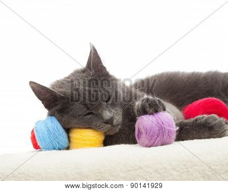 Gray Cat Sleeping