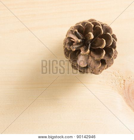 Pine Cone On Wood
