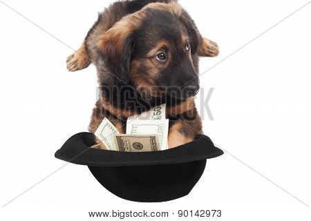 Puppy  With Dollars