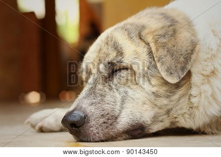Labrador Dog Lying On The Floor At The Park