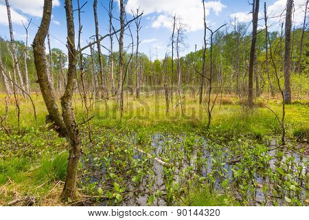 Wetlands At Springtime