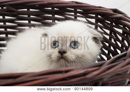 Kitten Sitting In A Straw Wicker Basket