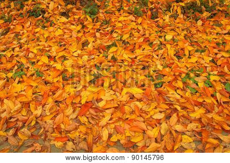 Beauty Autumn Background With Leaves