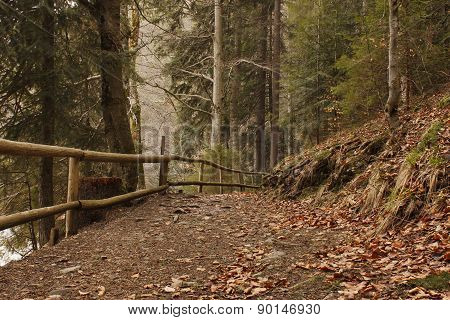 Road With Fence In Forest