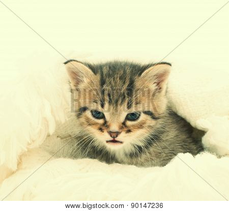 Cute Kitten On The Bedspread
