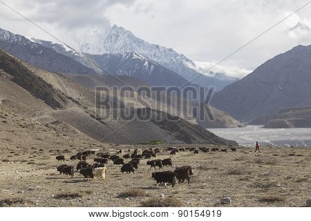 Kagbeni City In Lower Mustang District, Nepal