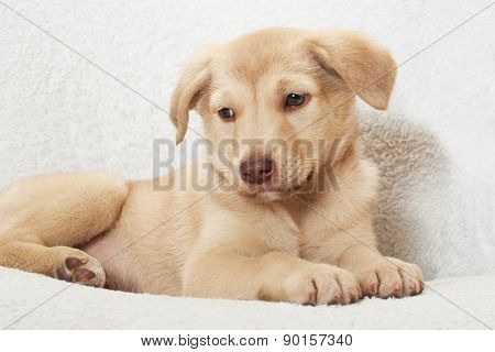 Puppy On A White Bedspread